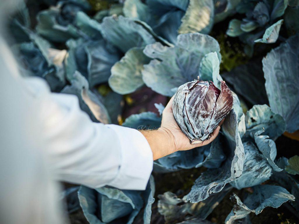 In het Poterne restaurant kiezen we onze ingrediënten het liefst uit de streek, biologisch en van het seizoen.
